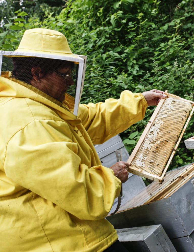 Récolte - Miel de Welferding à Sarreguemines