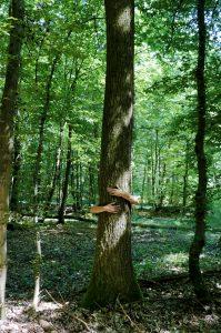 Sylvothérapie dans la forêt du Sitterswald